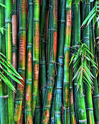 Photograph - Electric Bamboo 6 by Michael Raiman