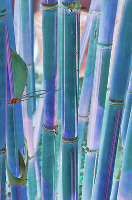 Photograph - Electric Bamboo 8 by Michael Raiman