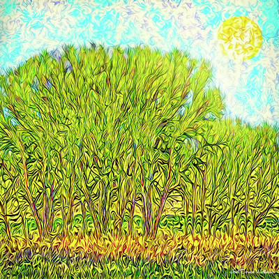 Digital Art - Electric Green Trees - Boulder County Colorado by Joel Bruce Wallach