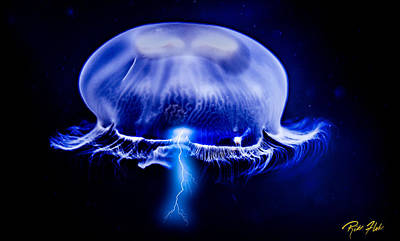 Photograph - Electric Jelly by Rikk Flohr