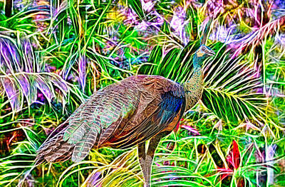 Painting - Electric Peacock by Judy Kay