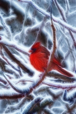 Photograph - Red Male Cardinal by Crystal Wightman
