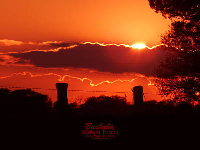 Photograph - Electric Sunset by Barbara Tristan