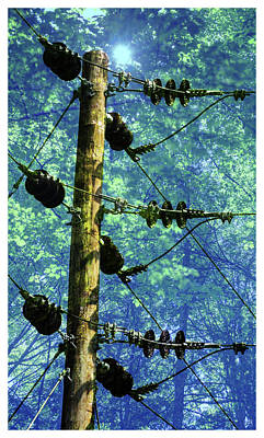 Photograph - Electric Tree by John Meader