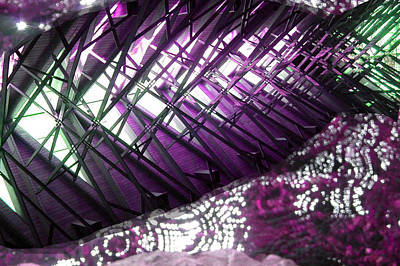 Photograph - Electric Violet Fish by Anne Cameron Cutri