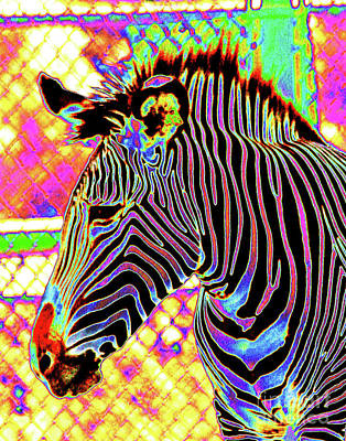 Photograph - Electric Zebra by Larry Oskin