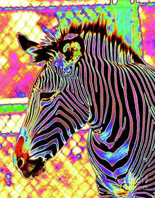 Photograph - Electric Zebra by Larry Oskin