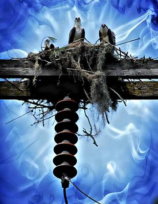 Photograph - Electrifying Osprey by Sheri McLeroy