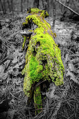 Photograph - Electro Log by Andrew Crispi