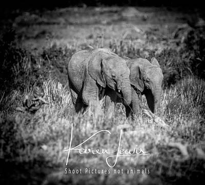 Photograph - Elefriends by Karen Lewis