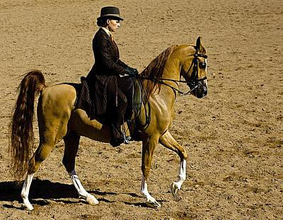 Arabians Photograph - Elegance by Barbara Zahno
