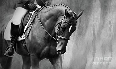 Elegance - Dressage Horse Large Art Print