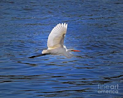 Photograph - Elegance In Flight by Sue Stefanowicz