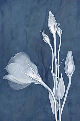 Photograph - Elegance In Slate by Leda Robertson