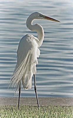 Photograph - Elegance In White by HH Photography of Florida