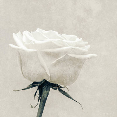 Photograph - Elegance In White by Wim Lanclus