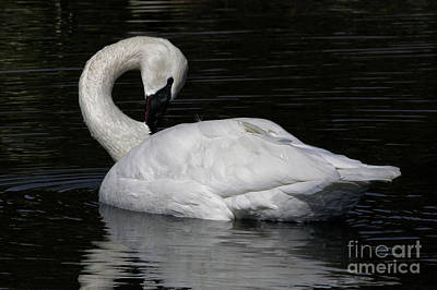 Photograph - Elegance by Sue Harper