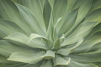 Digital Art - Elegant Agave by Ramona Murdock