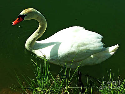 Photograph - Elegant And Beauty by Jasna Dragun