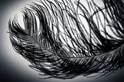 White Photograph - Elegant Black And White Feather Art  by Wall Art Prints