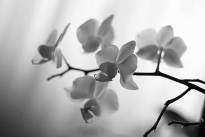 Elegant Bw Orchids  Art Print by Margherita Buschino