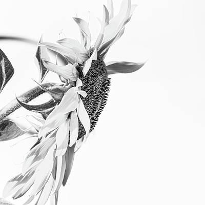 Elegant Coif 2 - Art Print