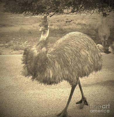 Photograph - Elegant Emu by Brigitte Emme
