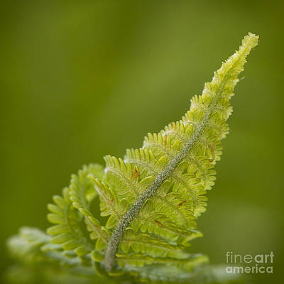 Photograph - Elegant Fern. by Clare Bambers