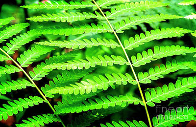 Photograph - Elegant Fern by Scott Kemper