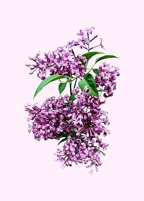Photograph - Elegant Lilacs by Susan Savad