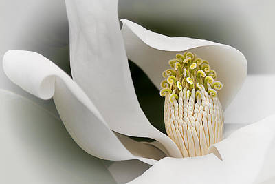 Photograph - Elegant Magnolia II by Ken Barrett
