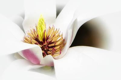 Photograph - Elegant Magnolia by Ken Barrett
