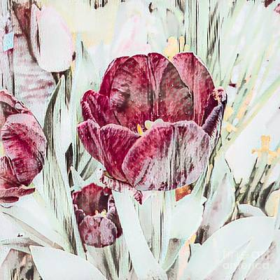 Photograph - Elegant Muted Tulips by Luther Fine Art