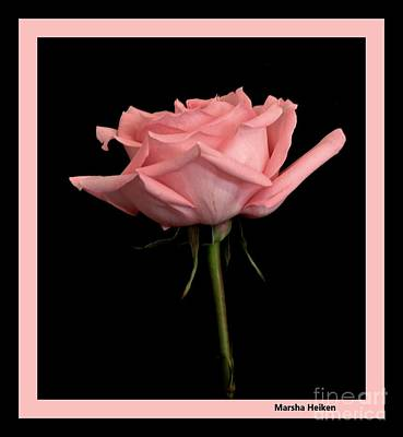 Photograph - Elegant Pink Rose In Black by Marsha Heiken