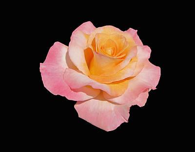 Photograph - Elegant Rose On Black by MTBobbins Photography