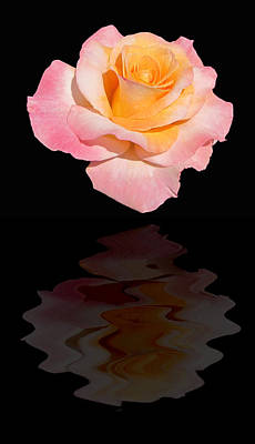Photograph - Elegant Rose Reflects by MTBobbins Photography