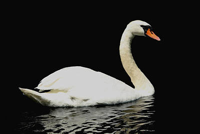 Photograph - Elegant Swan by Debbie Oppermann