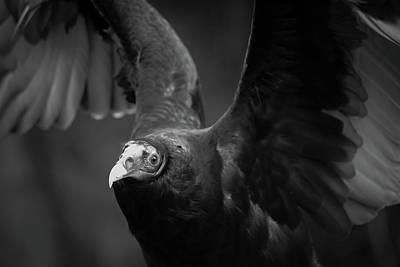 Photograph - Elegant The Flight by Rae Ann  M Garrett