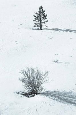 Photograph - Elegantly Simple, Simply Elegant  by Bijan Pirnia