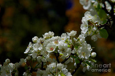 Photograph - Elegantly White by Vicki Pelham