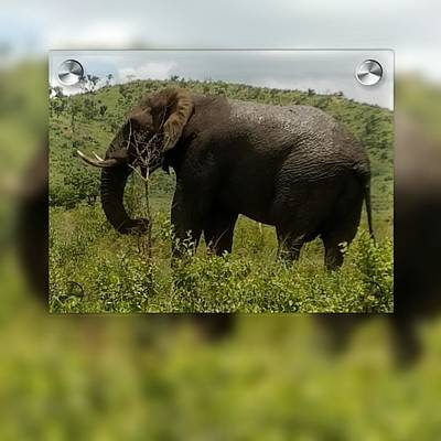 Digital Art - Elephant 4 by Vijay Sharon Govender