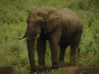 Photograph - Elephant 5 by Vijay Sharon Govender