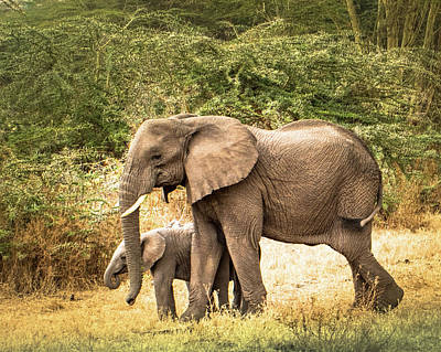 Photograph - Elephant And Calf by Janis Knight