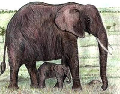 Elephant And Calf Print by Lauri Kraft