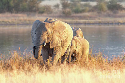 Wall Art - Photograph - Elephant And Her Babies by Pippa Dini