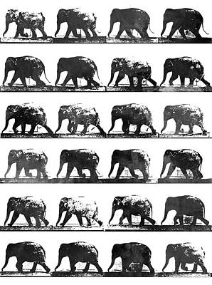 Animals Royalty-Free and Rights-Managed Images - Elephant Animal locomotion - BW by Aged Pixel