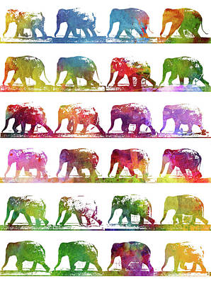Colorful Drawing - Elephant Animal Locomotion - White by Aged Pixel