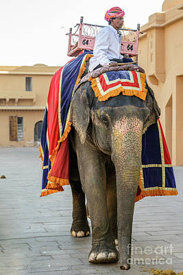 Photograph - Elephant At Amber Fort 01 by Werner Padarin