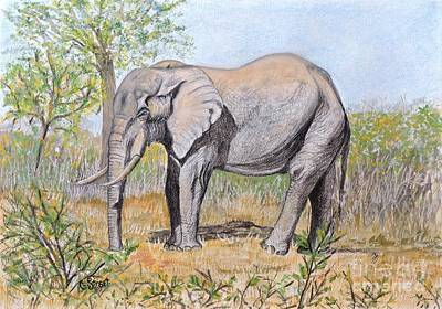 Pop Art Rights Managed Images - Elephant at Letaba Royalty-Free Image by Caroline Street