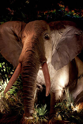 Photograph - Elephant At Rainforest Cafe by Ivete Basso Photography